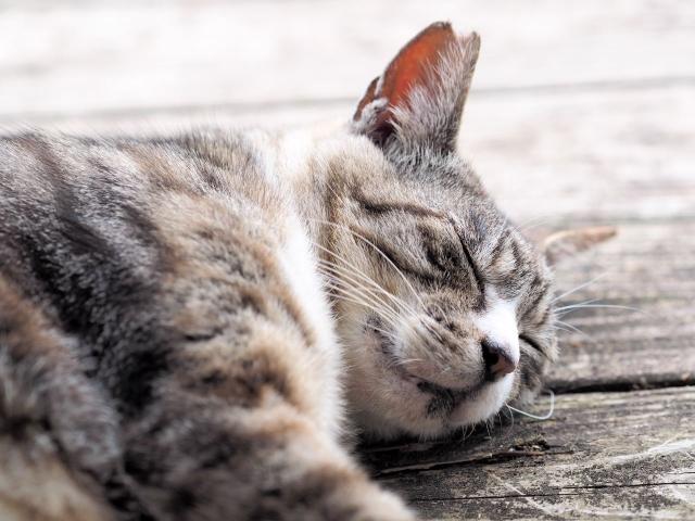 夜に眠たくならないのは睡眠力が落ちているから