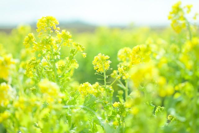 季節(春)とうつの関係性 季節(春)とうつの関係性 季節との関係性で、気分変調やうつでよく聞くの